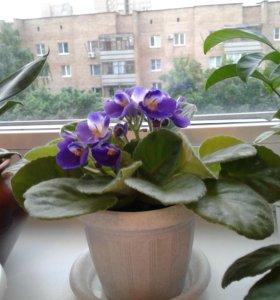 Комнатные растения в горшочках.