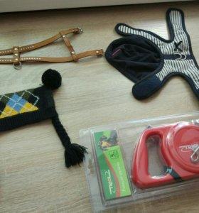 Вещи для чихуахуа