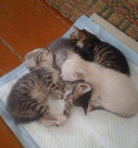 Милые котята