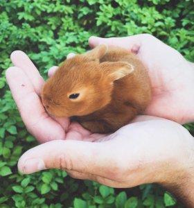 Чистокровные нзк крольчата ( мясная порода ) 🥕🐇