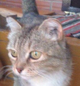 Кошка и два котёнка