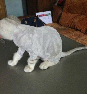 ✂️Стрижка кошек и собак с выездом на дом!!✂️🛁🐶🐱