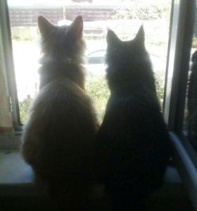 Котята ждут хозяина