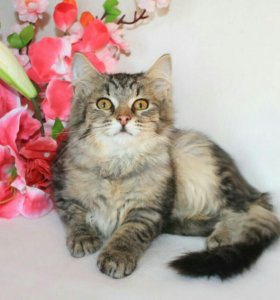 Котенок девочка, 4 месяца