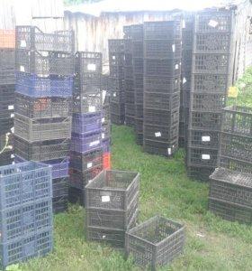 Ящики пластиковые под фрукты и овощи