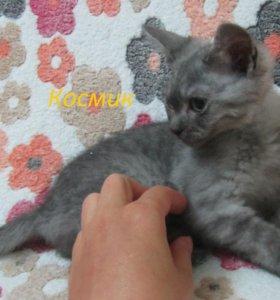 котята домашние даром