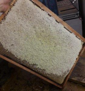 Мед с липы в сотах