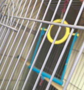 Клетка до попугая