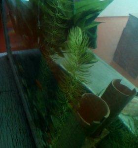 Продам водоросли