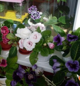 Купить комнатные цветы в архангельске