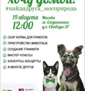 19 августа выставка собак и кошек из приютов !