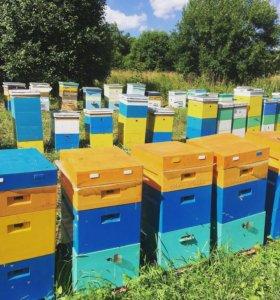 Мёд,пыльца,перга с пасеки оптом и в розницу