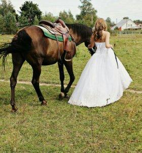 Фотограф. Свадебная фотосессия. Свадебный фотограф