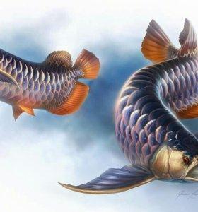 Аквариумные рыбки оптом.