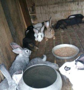 Кролики и нутрии!!!