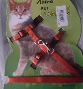 Ремень для кошки или маленькой собаки