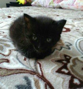 Котёнок мальчик