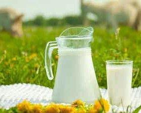Козье молоко и сметана