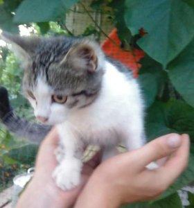 Котика в добрые руки