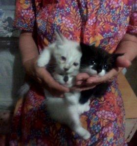 кошки и 1 кот