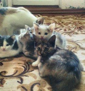 Ищут дом и любящих хозяев очаровательные котята.