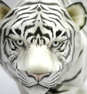 the white tiger essay India in the white tiger word count: 501 approx pages: 2 save essay view my saved essays downloads: 1 grade level: high school login or join now to rate the.