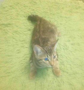 Котята без породы