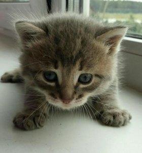 Два кота и одну кошечку уже отдали!
