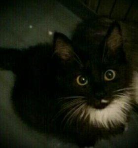 Котенок в поисках дома.