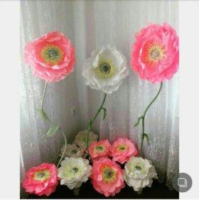 Цветы для фотосесий