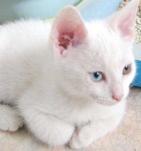 Котёнок с РАЗНОЦВЕТНЫМИ ГЛАЗКАМИ.