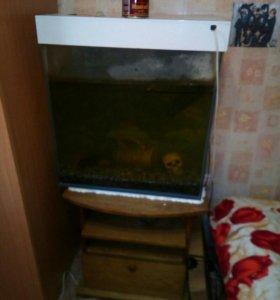 Сомы с аквариумом140л.