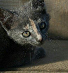 Котята.