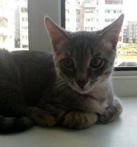 Котик 4 месяца БЕСПЛАТНО