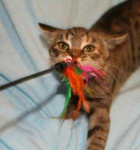 Котенок (девочка 3.5мес)