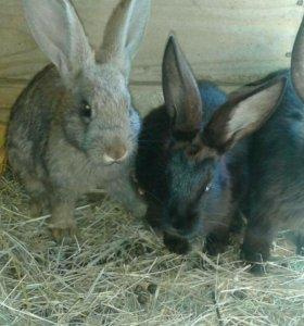 Кролики подростки.