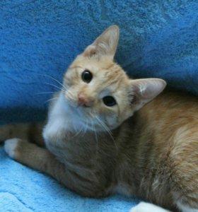 Котенок (мальчик 3.5м)