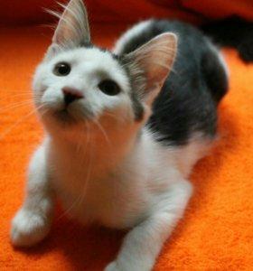 Котенок (мальчик 3.5м).