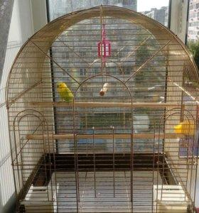 Попугай с большой клеткой