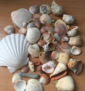 Ракушки,камни для аквариума и интерьера