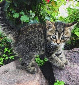 Котёнок котик