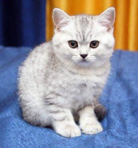 Милейшие котята
