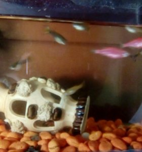 Срочно Аквариум,с рыбками