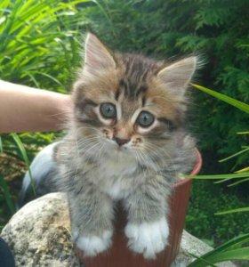 Котёночек в добрые руки!