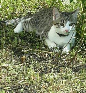 Котята 6 месяцев