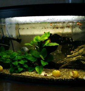 Продам аквариум 53 литра с его жителями,растениями
