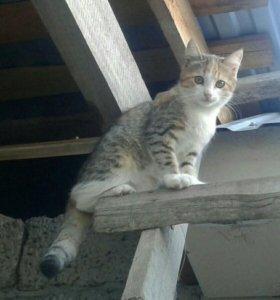 Котенок(кошечка 3 мес.)