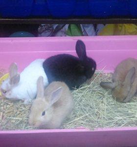 Малыши Декоративные  Кролики