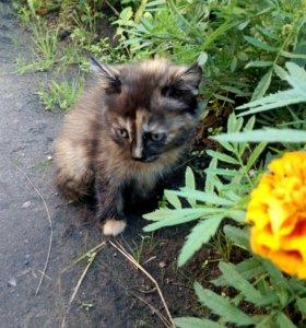 Котята в дар (с доставкой)