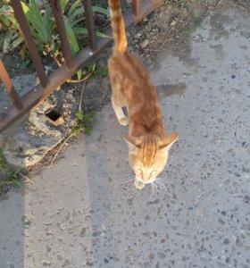 Котик по имени Рыжик